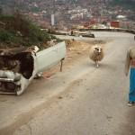 Namik et son mouton